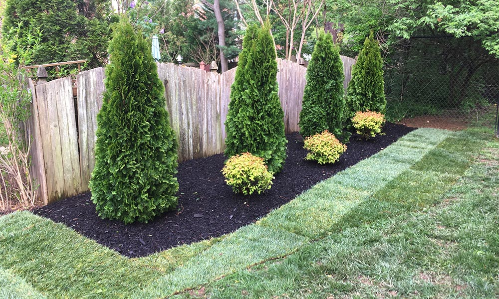 Greensweep Llc Silver Spring Dc Baltimore Landscaping